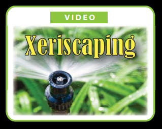 Xeriscaping Tips