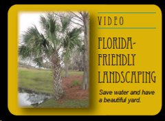 Save water and have a beautiful yard with Florida-friendly landscaping.
